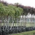 Высадят деревья