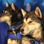 Основные правила применения средств от блох для собак и кошек