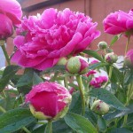 Продажи цветов на День всех влюбленных в Уфе упали в несколько раз
