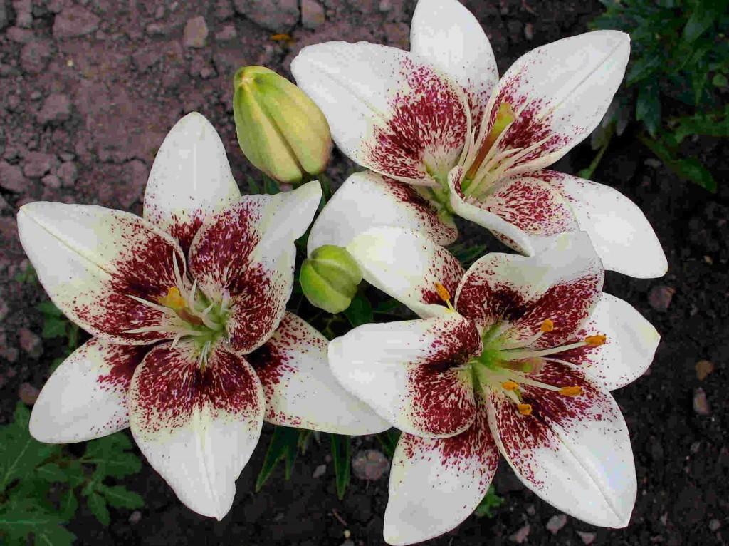 выставка аленьких цветочков