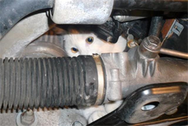 Кот под капотом