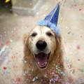 праздник для собак