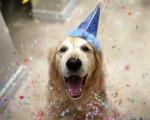 12 июня в парке им. Якутова устроят праздник для собак