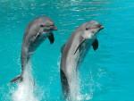 В Уфе открылся дельфинарий