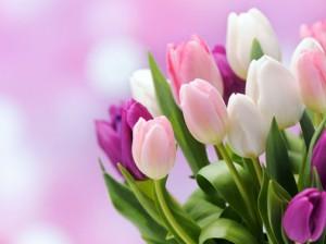 клумбы с тюльпанами уфа