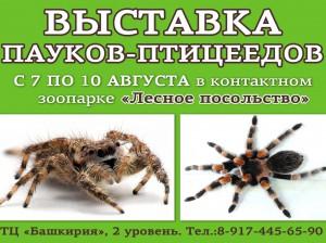 Выставка пауков - птицеедов