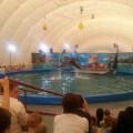 Уфимский дельфинарий