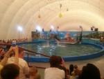Уфимский дельфинарий закрывается