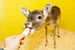 Пенсионеры смогут посетить контактный зоопарк «Лесное посольство» бесплатно