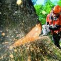 дерево бензопила