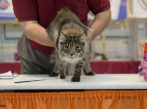 Выставка кошек 2015