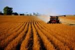 Создание индивидуального фермерского хозяйства
