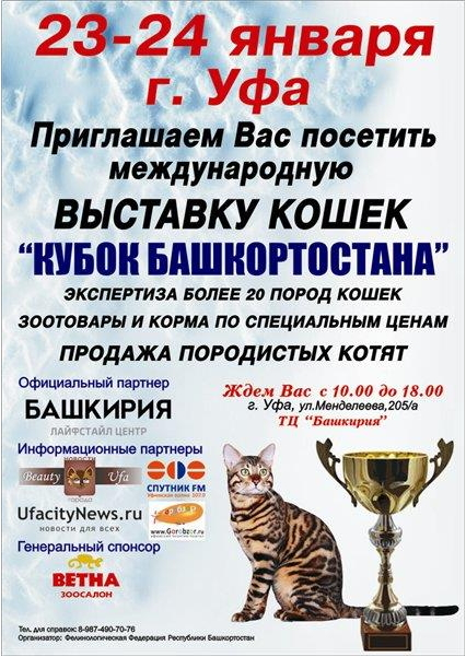 Выставка кошек кубок башкортостана
