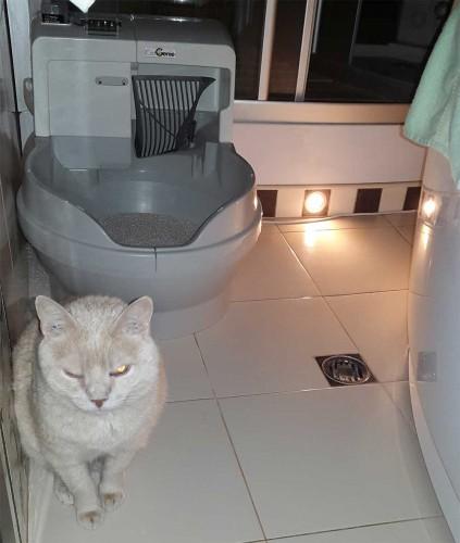 Автоматический туалет CatGenie 120 в умном доме asency.ru | Обзоры на темы: интеллектуальное здание, безопасность, видеонаблюдение, система контроля и управления доступом (СКУД), учет электроэнергии, воды и газа