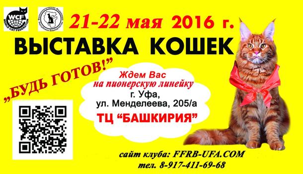 Международная выставка кошек Будь готов